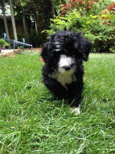 My tiny running puppy.  Wait until